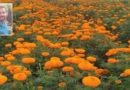 फूलों से महकता गाँव मेमदी