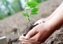व्यापार से बचाया जाता पर्यावरण