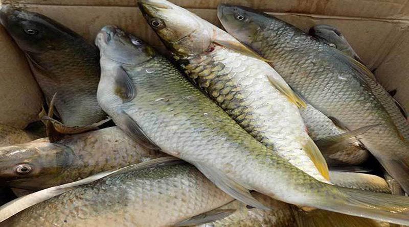 aquaculture-system