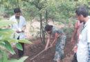 बागवानी तीर्थ बने लक्ष्मीनारायण पाटीदार के बगीचे