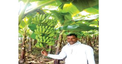 banana-increased-maheshs-earnings