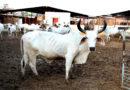 सप्ताह में दो दिन गांव में सेवाएँ देंगे पशु चिकित्सक