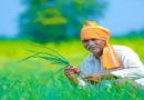 पीएम किसान योजना – नहीं लुभा पाई किसानों को