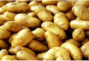 potato-varieties