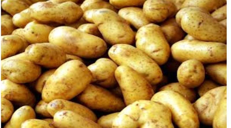 potato-varieties