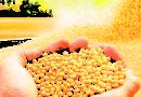 सोया मिल को सीधे किसानों से सोयाबीन खरीदने की अनुमति मिले