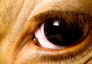 पशुओं की प्राथमिक चिकित्सा