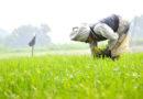 किसान जैविक खेती करें