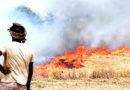 नरवाई-पराली जलाना किसानों की मजबूरी है