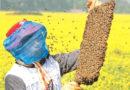 मधुमक्खी पालन एक व्यवसाय