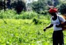 जैविक कीट एवं रोग नाशक उपयोग : एक पर्यावरण हितैषी उपाय