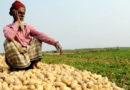 अब आलू की कीमतें गिरने से अन्नदाताओं में असंतोष