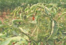 के.जे. एजुकेशन सोसायटी द्वारा रबी में कृषि प्रदर्शन सामग्री वितरित