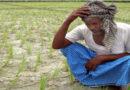किसानों की हताशा, समर्थन मूल्य वृद्धि से भी नहीं मिल रहा है लाभ