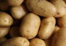 falling potato prices