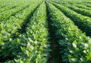 Soybeans, Seed Treatment,