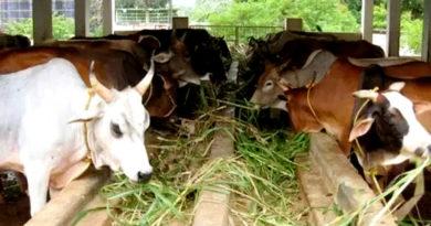 पशुओं का कार्य क्षमता एवं आहार प्रबंधन