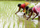 धान उत्पादक किसानों को जस्ट-इन-टाइम एप से 878 करोड़ का भुगतान
