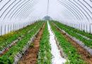 संरक्षित खेती