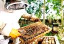 मधुमक्खी पालन कम लागत में अधिक मुनाफा