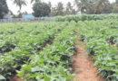 जैविक खेती और अनुसंधान