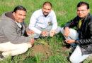 जैविक खेती कर रहे प्रगतिशील किसान