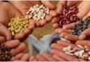 बीज व्यापार – सील की ढील क्यों ?