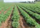 कृषि से संभावनाओं को  तलाशने का वक्त