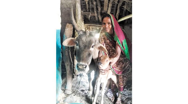 गाय के समय पर इलाज से परिवार को मिला सहारा