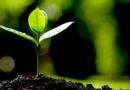 जैविक कृषि को अपनाएं किसान