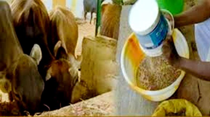 पशुओं के लिए सम्पूर्ण आहार पद्धति
