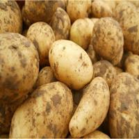 potato-aalo