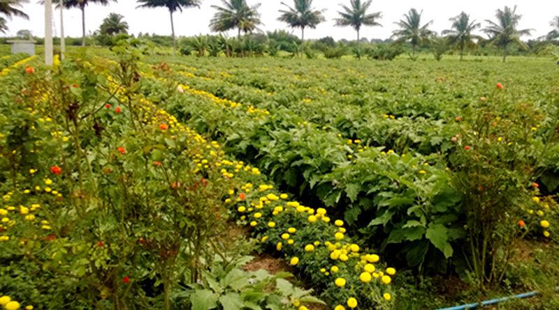 मिश्रित खेती बनाम मुनाफे की खेती