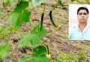 मेड़ पर लगी जाली बनी सब्जी उत्पादन का जरिया