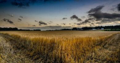 लॉकडाउन: कृषि में सरकारी दावे और ज़मीनी हक़ीक़त