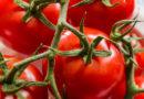 मार्केट इंटरवेंशन स्कीम से किसानों को बाग़वानी फसलों का लाभकारी मूल्य मिलेगा