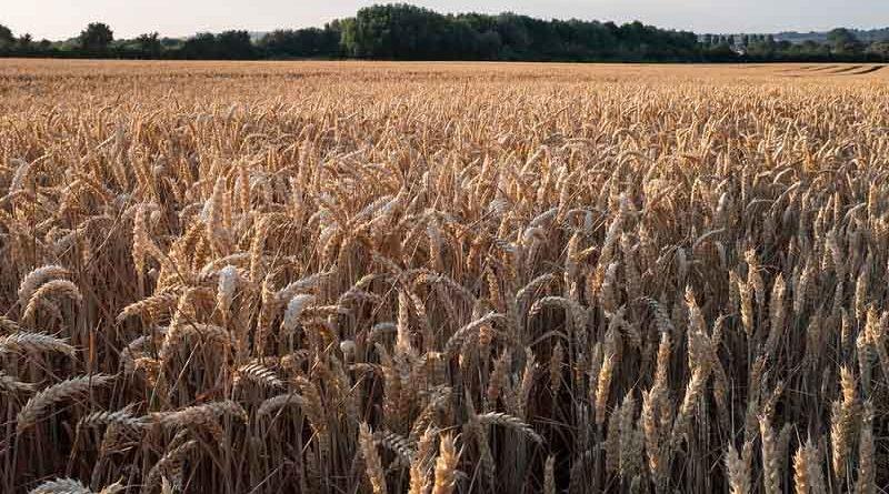 किसानों से खाद-बीज का अग्रिम उठाव करने की अपील