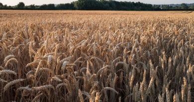 मंडियों के बाहर भी समर्थन मूल्य पर अनाज बेच सकेंगे किसान