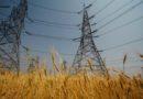 मध्य प्रदेश में गेहूं खरीदी के लिए 80 हजार किसानों को भेजे गए एसएमएस