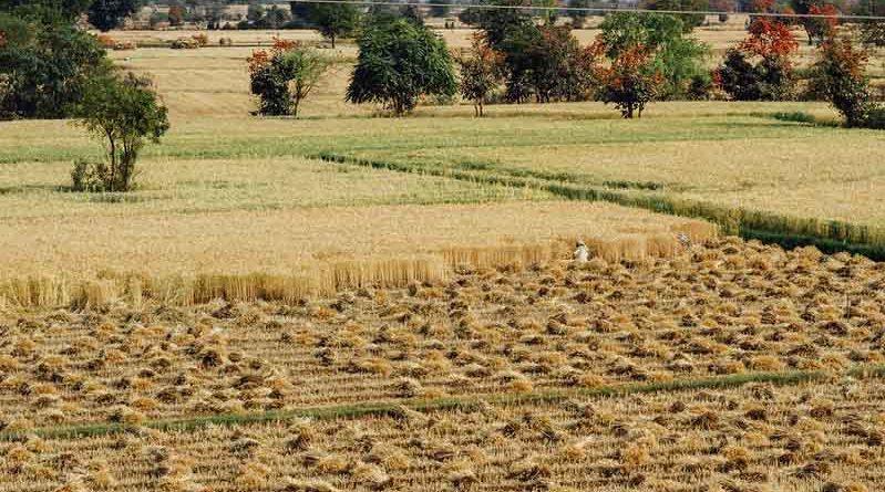 मध्य प्रदेश में समर्थन-मूल्य पर 17 लाख टन से अधिक गेहूँ खरीदी