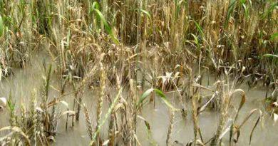 1 मई को किसानों के खाते में आएँगे बीमा राशि के 2990 करोड़: मध्य प्रदेश