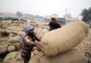 गेहूं उपार्जन की राशि किसानों के खातों में पहुँच रही है 200 करोड़ रूपए बैंकों को भेजे गए
