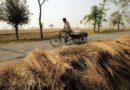 देश में गेहूं की 67 प्रतिशत कटाई पूरी