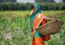 कोविड-19 के खिलाफ लड़ाई में किसानों की समस्याएं हल करने में भारतीय कृषि अनुसंधान परिषद के अनेक प्रयास