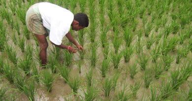 एम एस पी पर फेल धान बीज की खरीदी 31 मई तक: रायपुर