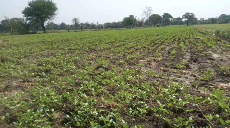 फ़सल बीमा भुगतान किसानों की समस्या का हल नहीं