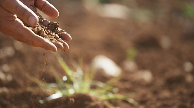 मिट्टी एवं पर्यावरण
