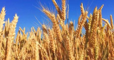 केन्द्रों पर 31 मई और सौदा पत्रक से 30 जून तक होगी फसलों की खरीदी:मध्य प्रदेश