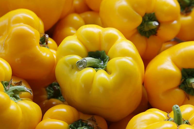 मध्य प्रदेश राजभवन के पॉली हाऊस में लगी सब्जियाँ