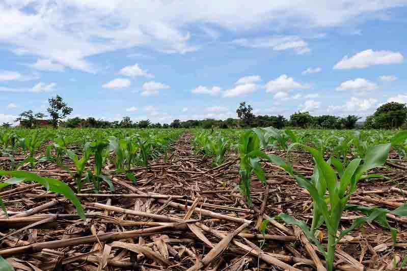 एकीकृत कृषि प्रणाली अपनाकर ही छोटे किसानों की आय बढ़ौतरी होगी